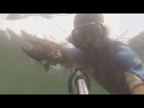 GoPro Spear Fishing Manasquan Inlet NJ-play In HD