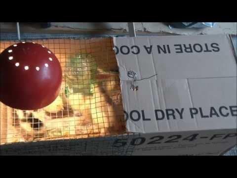 Costruire pratico abbeveratoio per galline e pulcini t - Costruire casa in economia ...