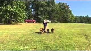 Off Leash Heeling With 4 Pups! Dog Training Western Pa