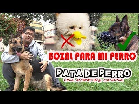 BOZAL PARA MI PERRO- PATA DE PERRO una aventura canina