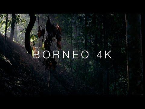Borneo 4K