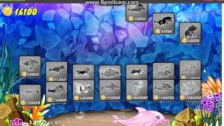 играю в шоу дельфинов 6