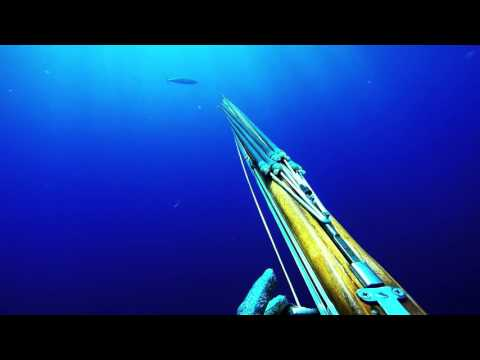 Spearfishing wahoo, chasse sous marine Martinique, Caribbean, barracudas ,rainbow runner, thazards