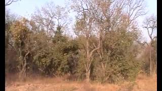 Kolda: la survie du bétail est menacée par les feux de brousse