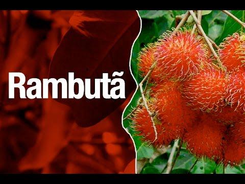 Rambutan ou Rambutã - Safari Garden