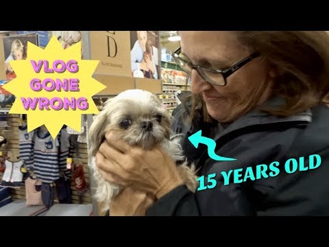 ADOPTING A 15 YEAR OLD DOG FROM PETSMART