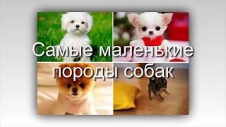ТОП 12 самых маленьких пород собак