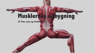 idræt musklerne film