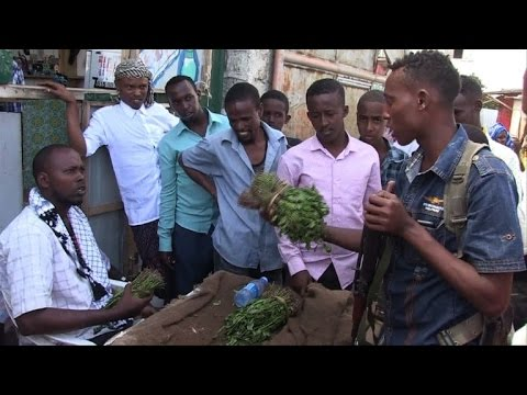 Somalia khat ban angers growers, traders and users