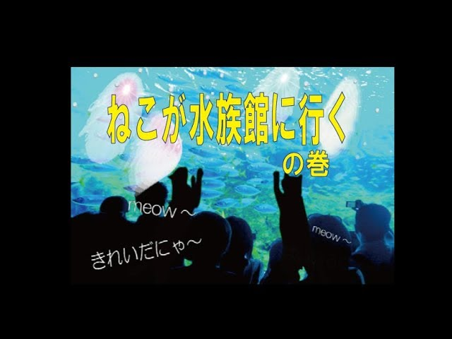 ネコ動画Cat lover video ねこが水族館に行くの巻 Cats go to the aquarium. kk object