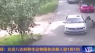 Seorang Wanita Tewas Ketika Ditirkam Macan Di Taman Safari China-Tidak Di Sensor