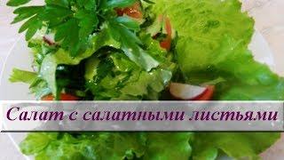 Как приготовить зеленый салат. Салат с салатными листьями
