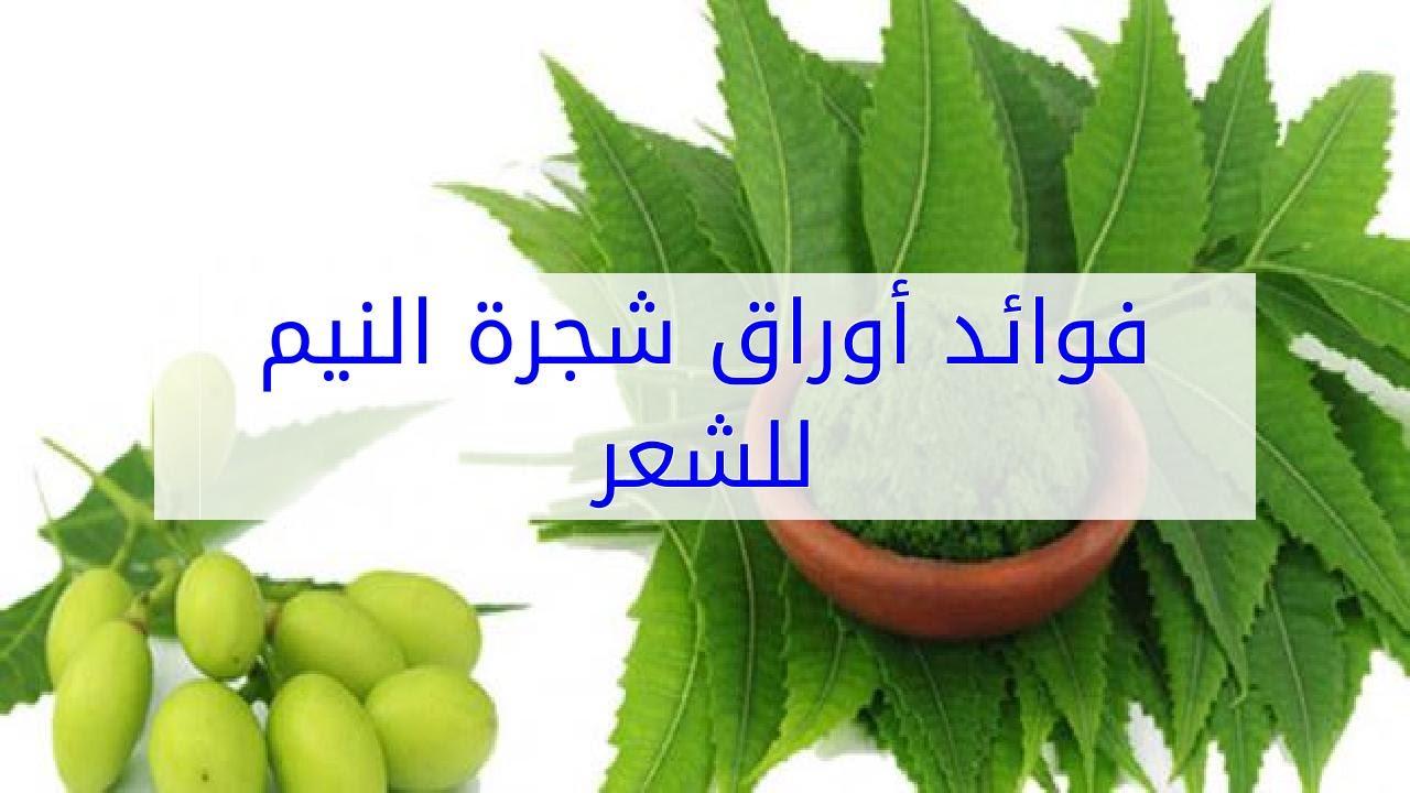 فوائد عشبة النيم مع طريقة استعمالها في العناية بالبشرة والشعر والجسم