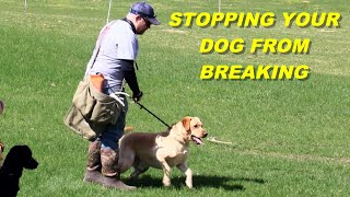 Stopping Your Dog From Breaking