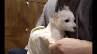 작고 소중한 강아지 목욕하…