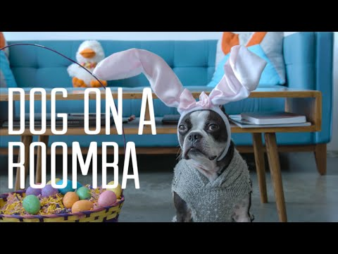 Dog On A Roomba Easter Version