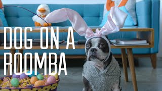 Dog on a Roomba - Easter Edition!!!