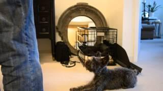 Best Dog Tricks: Black Mini Schnauzer New
