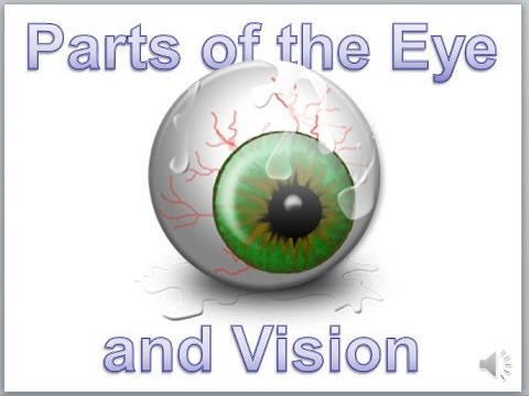 Eye Anatomy and Sight - YouTube