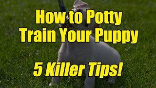 5 Killer Tips on How To Potty Train Your Puppy!