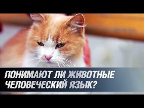 Понимают ли животные человеческий язык?