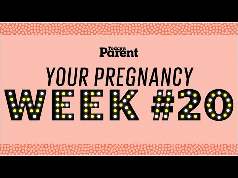 Your pregnancy: 20 weeks