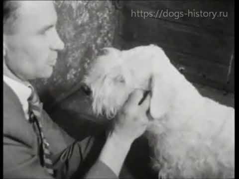 1951 International Dog Show (Amsterdam, Netherlands)