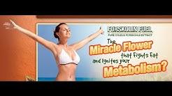 Forskolin Slim Trim 2000 | Forskolin for Weight Loss