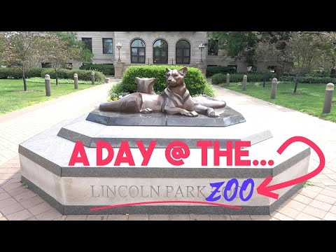 All The Animals I Saw @ The Lincoln Park Zoo