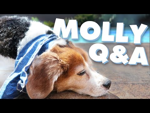 What Does Molly Do All Day? | Monday Vlog