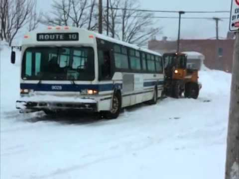 St. John's Public Transit