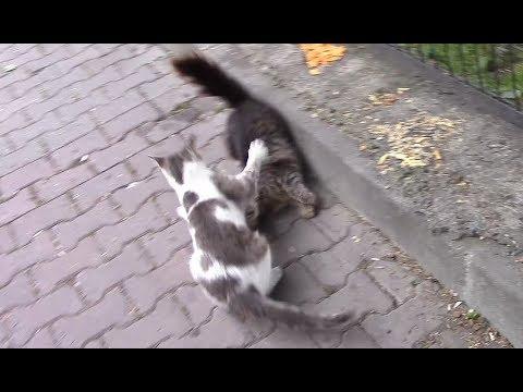 Funny cats fighting for food.😂😂😂 Aynı Kapta Mamayı Paylaşamayan Sevimli Kediler.