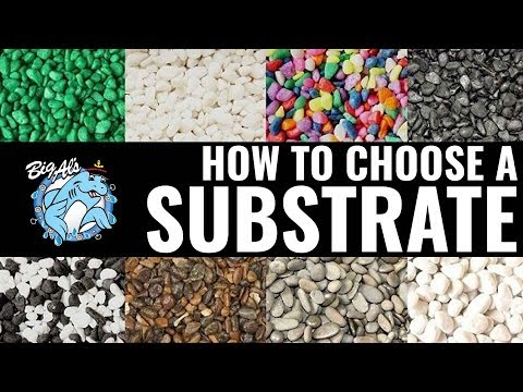 How To Choose An Aquarium Substrate | BigAlsPets.com