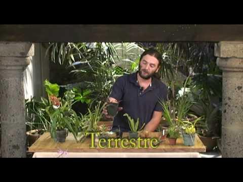 Tipos de crecimiento de las orquídeas