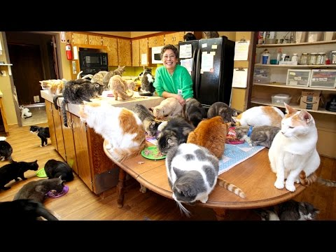Thumbnail: Ultimate Cat Lady: Woman Shares Her Home With 1,100 Felines