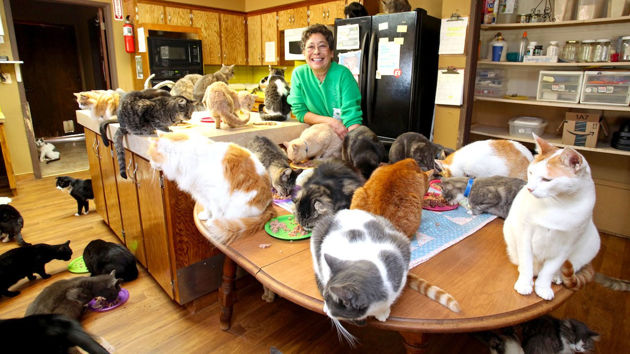 Ultimate Cat Lady Woman Shares Her Home With 1,100 Felines