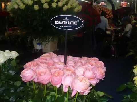 Agriflor 2010, 2011, Trade show Ecuador, Expoflores, Quito, Ecuadorian Roses