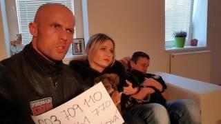 Šteňátka k adopci-Pardubice