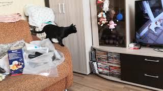 Наши коты смотрят видео.
