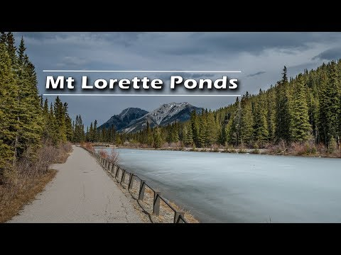 Mt. Lorette Ponds Kananaskis Day Trip   Journey Alberta