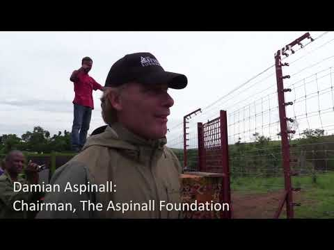 Four gorilla brothers from Kent travel back to the wild with The Aspinall Foundation