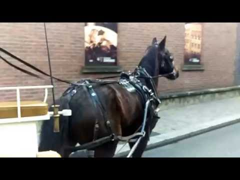 Horse and Carriage Ride in Dublin