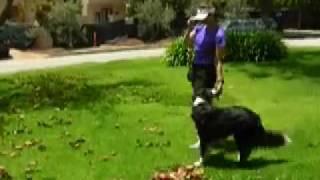 Loose Leash Running (running Politely On Leash)