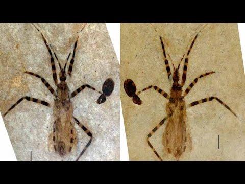 El insecto màs letal murió hace 50 millones de años