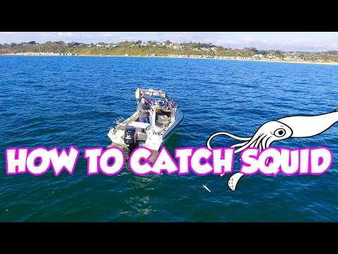 Beginners Guide  Squid Fishing Tips Catching Find Tutorial Jig  How TO