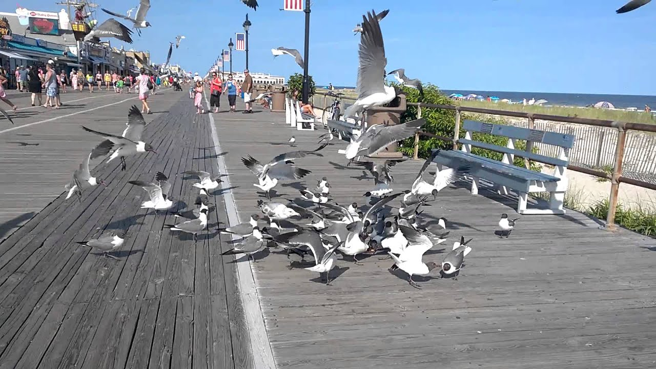 Seagulls Fighting Over A Slice Of Pizza On The Boardwalk