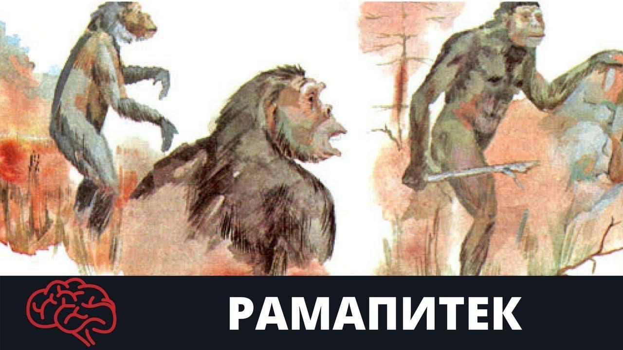Картинки по запросу Рамапитек