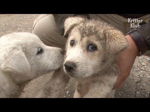 This Cute Dog Suddenly Got Puppies Overnight?!  | Kritter Klub