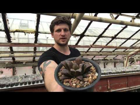 Растения почтой - самый лучший способ пересылки растений на большие расстояния