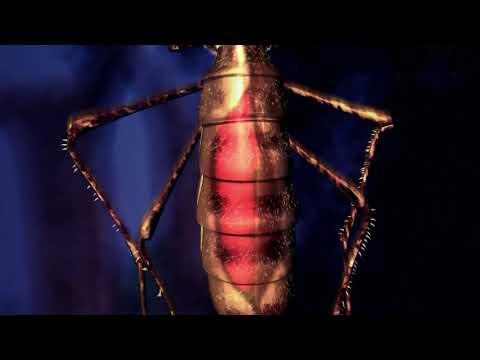 Малярия: заражение малярией и развитие малярийного плазмодия в организме человека.